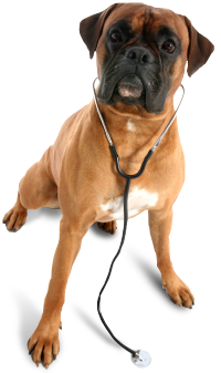 WAGS Mobile Vet Your Local House Call Vet